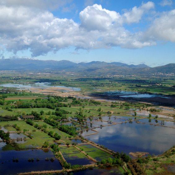 Parc Natural dels Aiguamolls de l'Empordà - Imatge de Santi Font